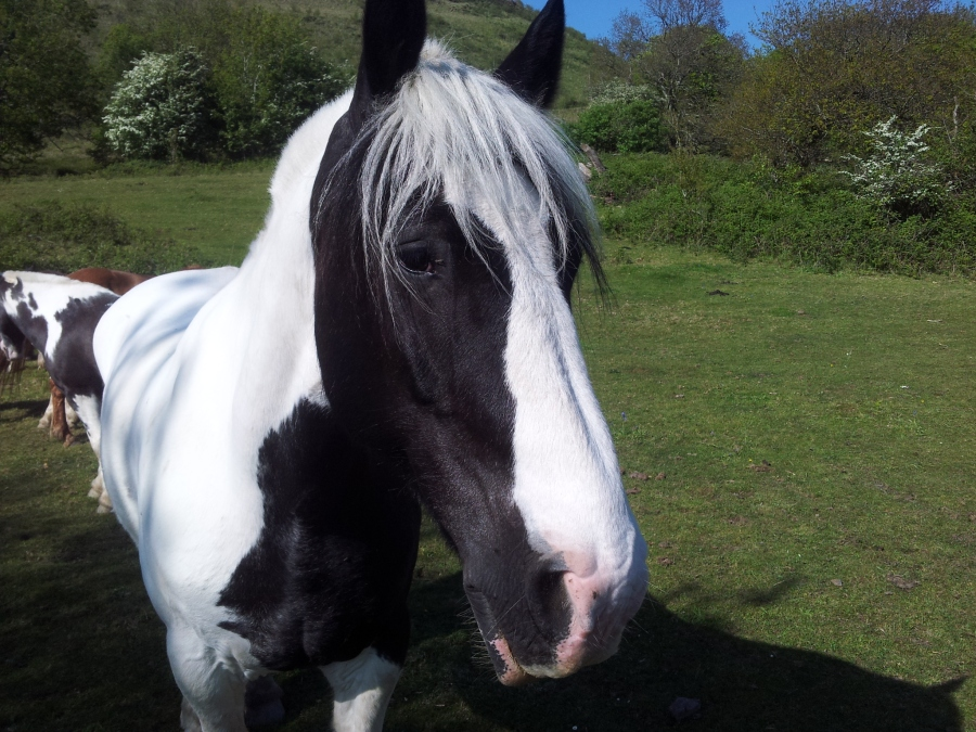 Facing Horse