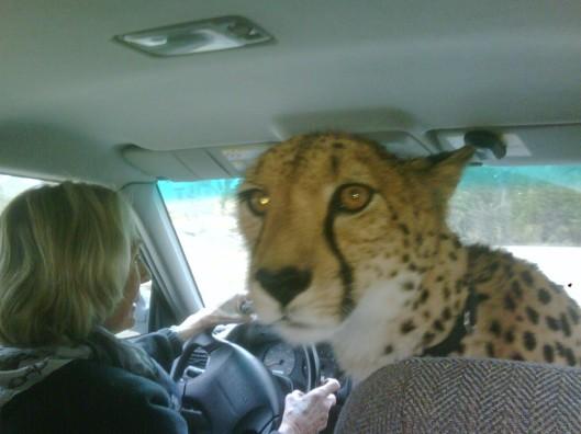 Front Passenger