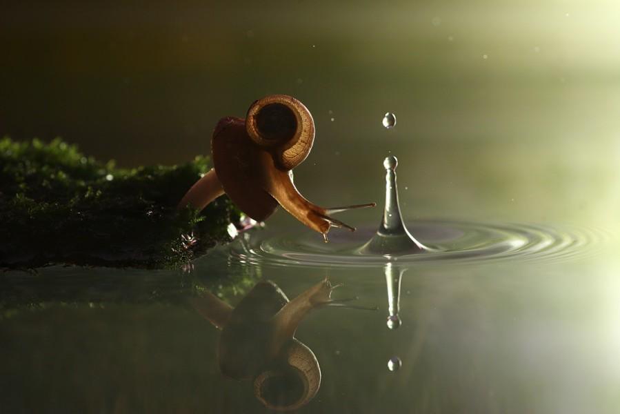 Snail Water Drop
