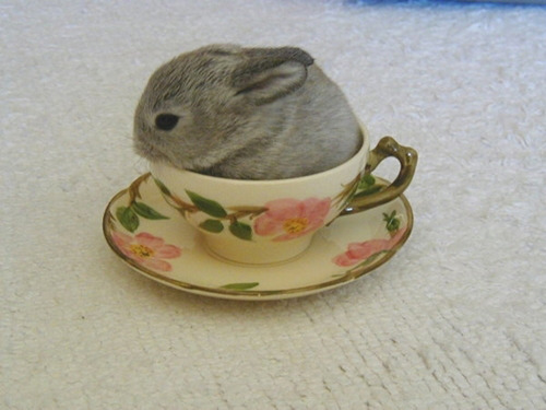 Tea cup with animal