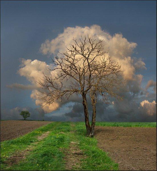 Tree Scene View