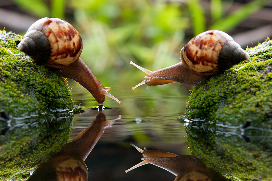 Snails Drinking Water